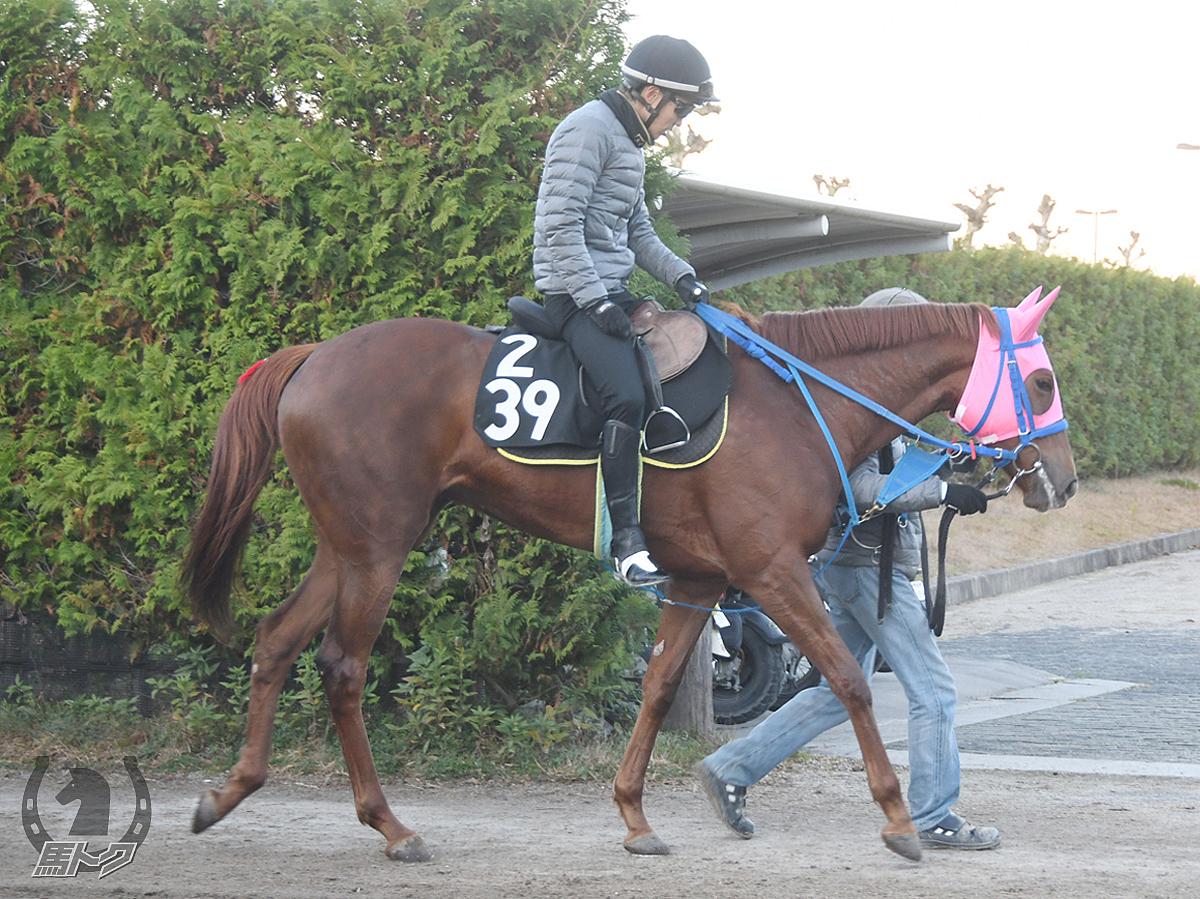 カリマンタンの馬体写真
