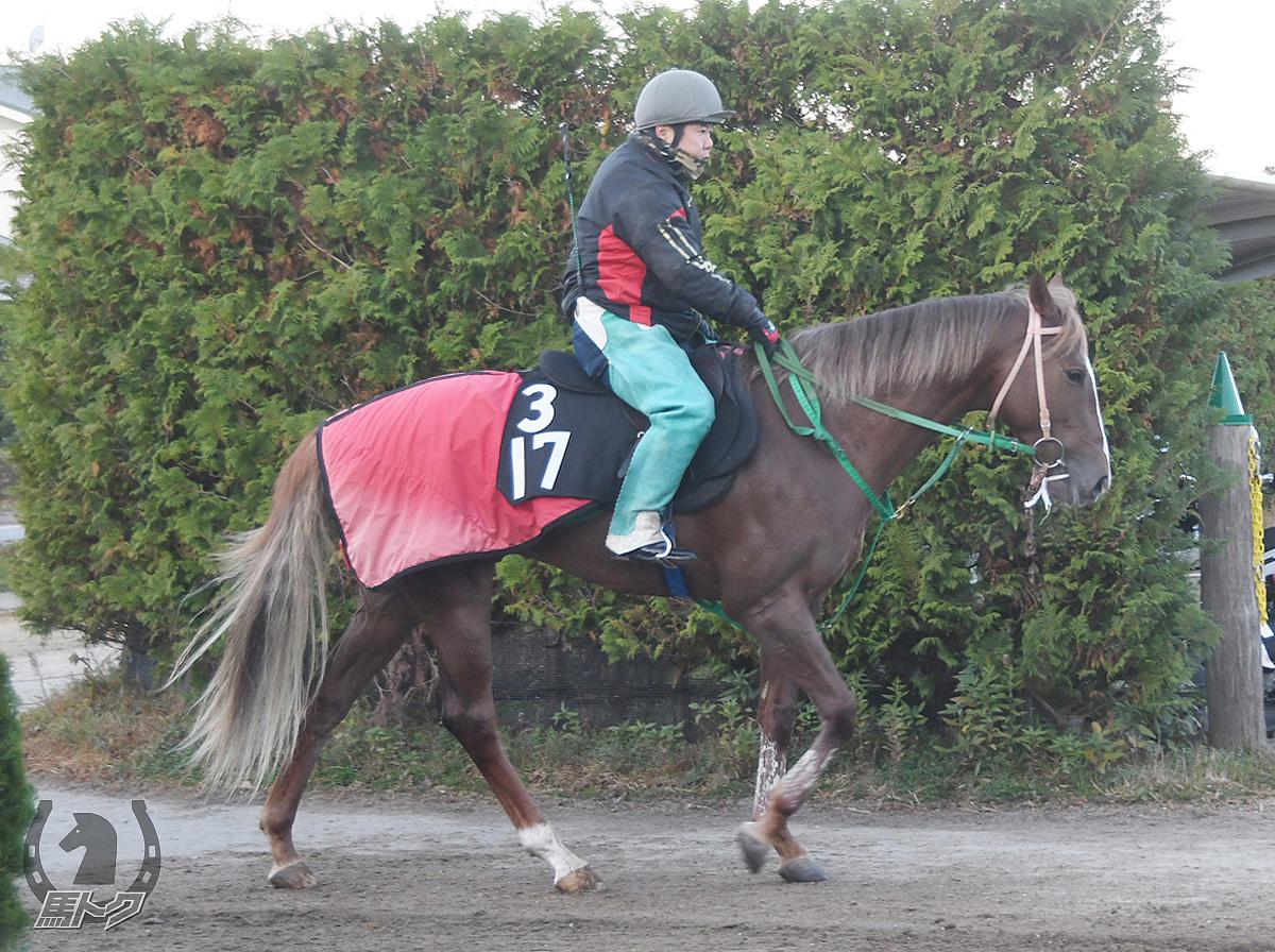 クリノワンダフルの馬体写真