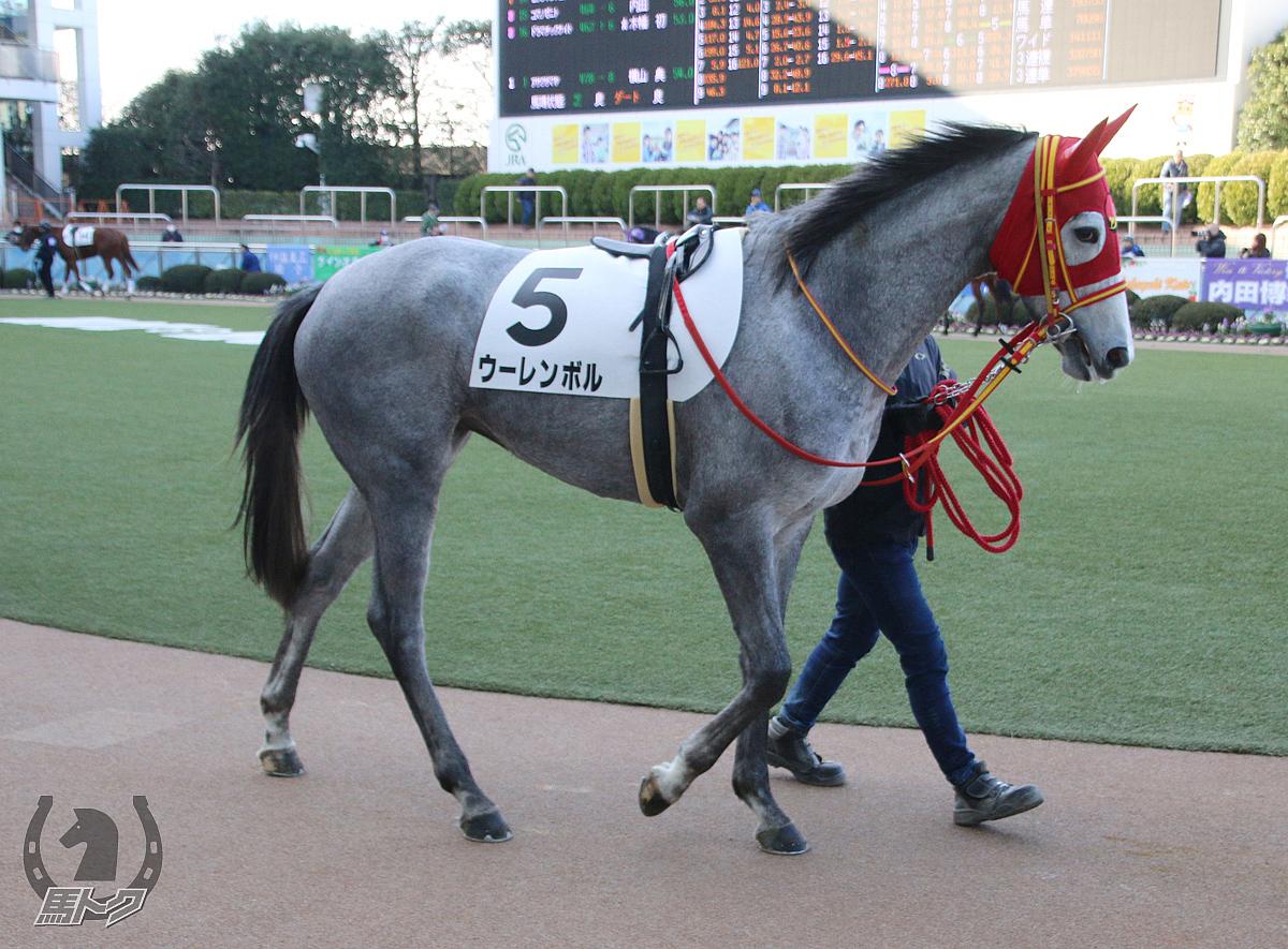 ウーレンボルの馬体写真