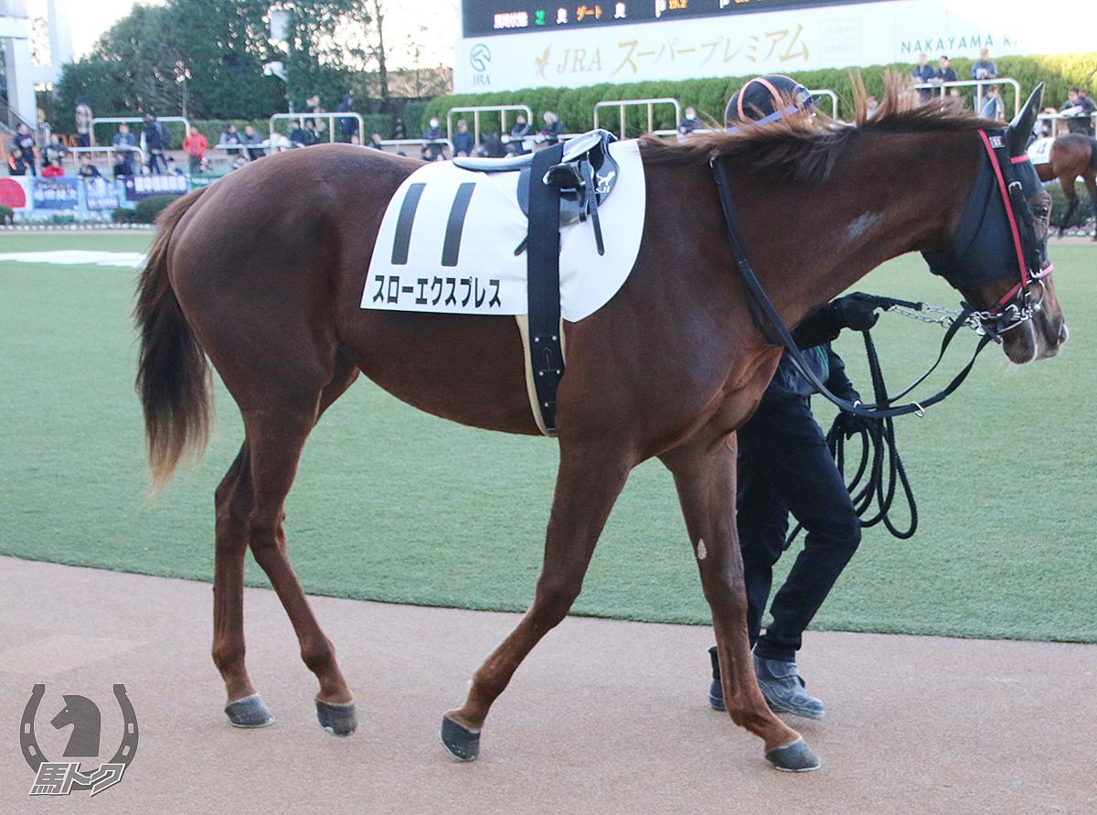 スローエクスプレスの馬体写真