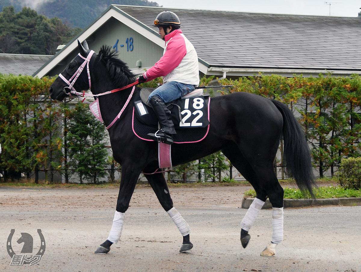 レイトブルーミングの馬体写真