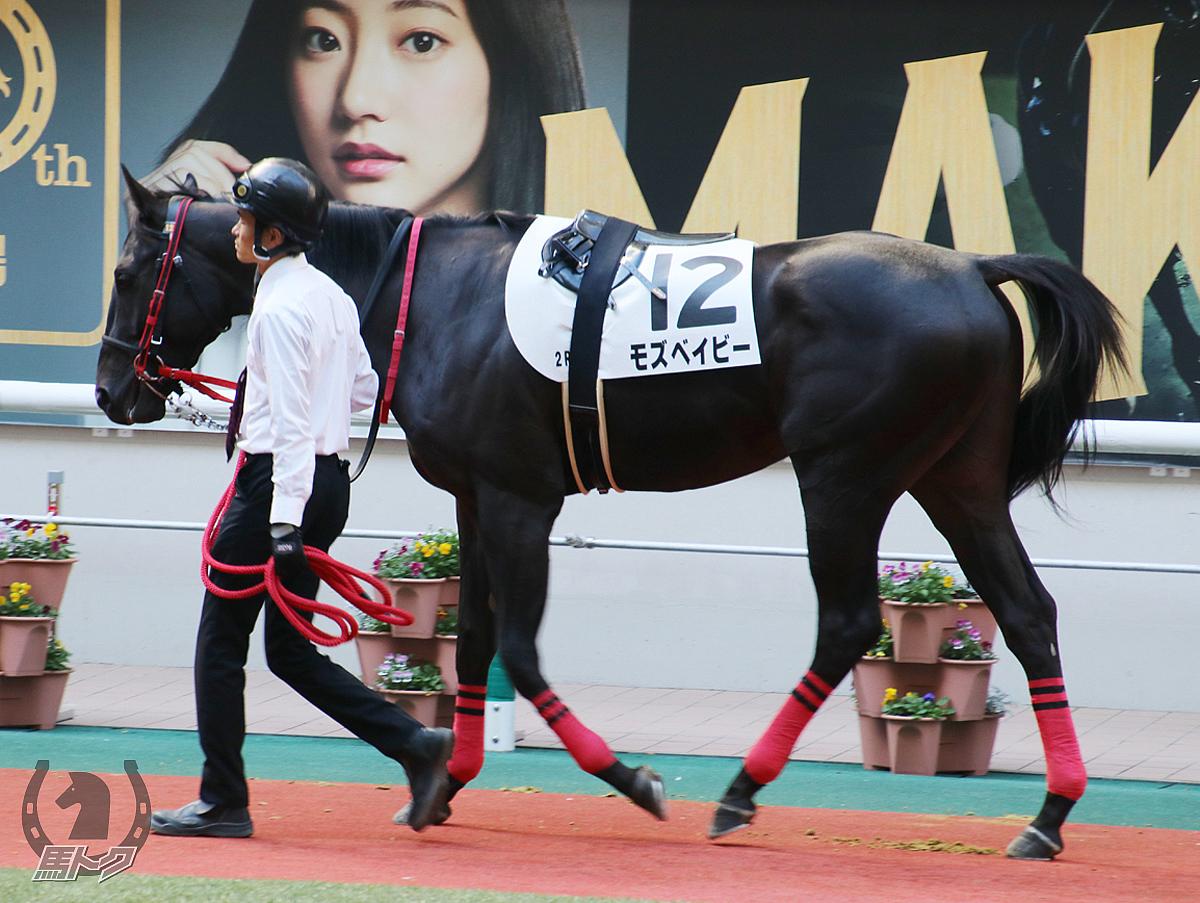 モズベイビーの馬体写真