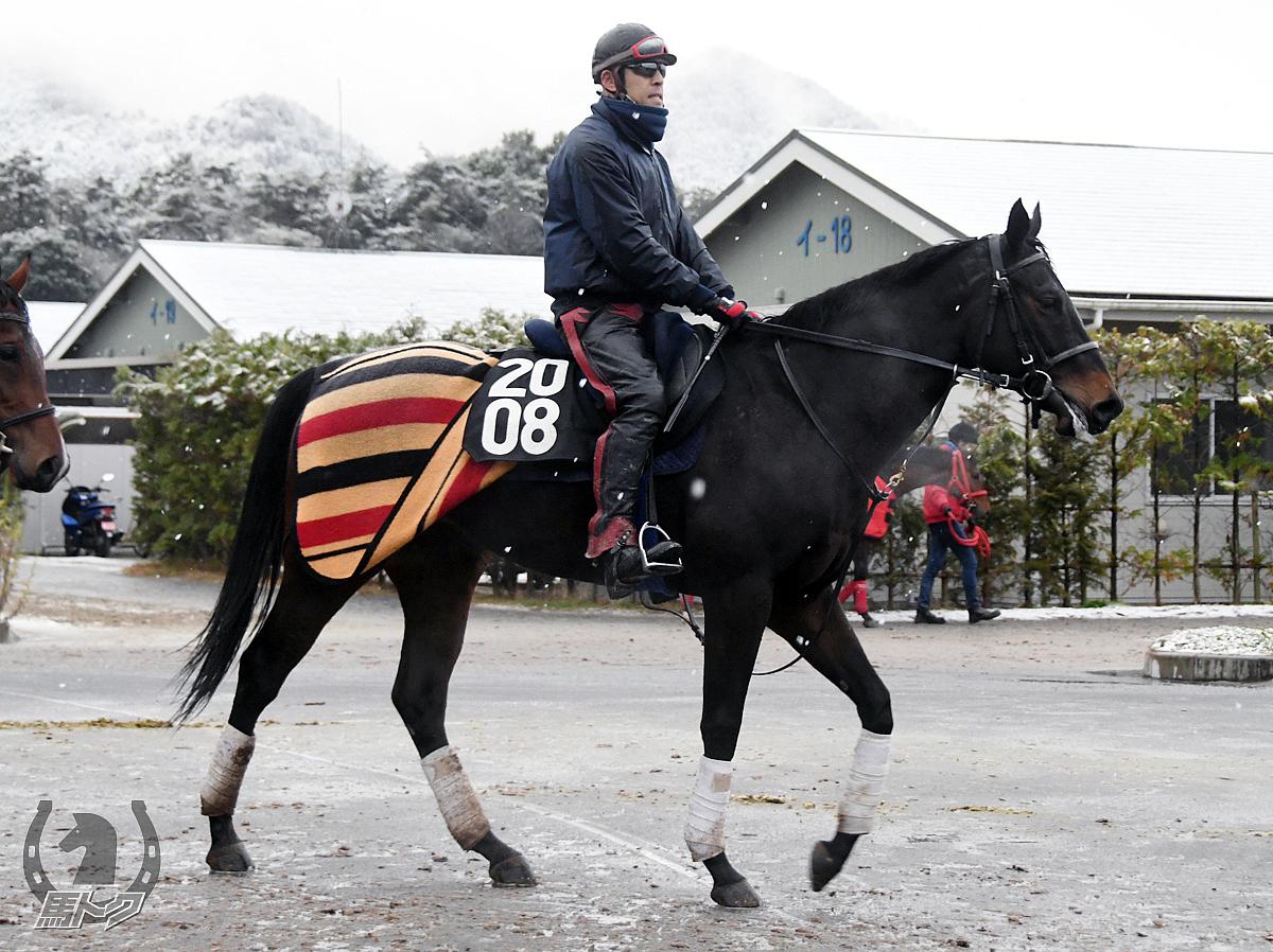 ブラッディムーンの馬体写真