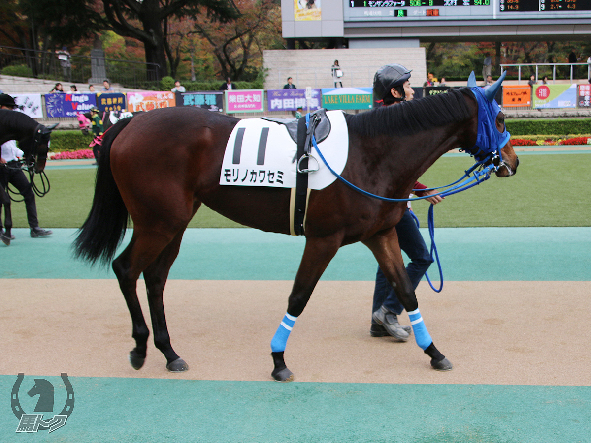 モリノカワセミの馬体写真