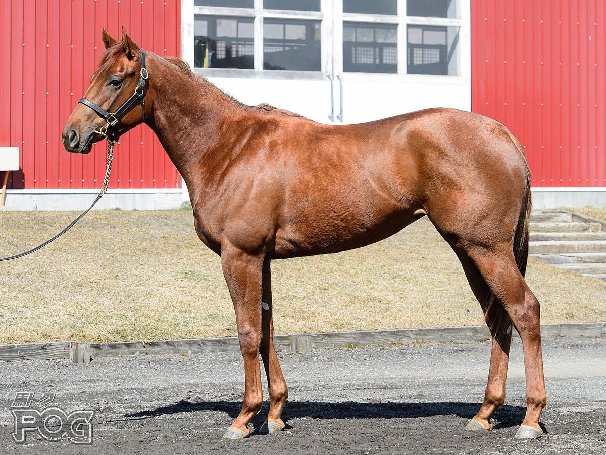 エリーキャナルの馬体写真