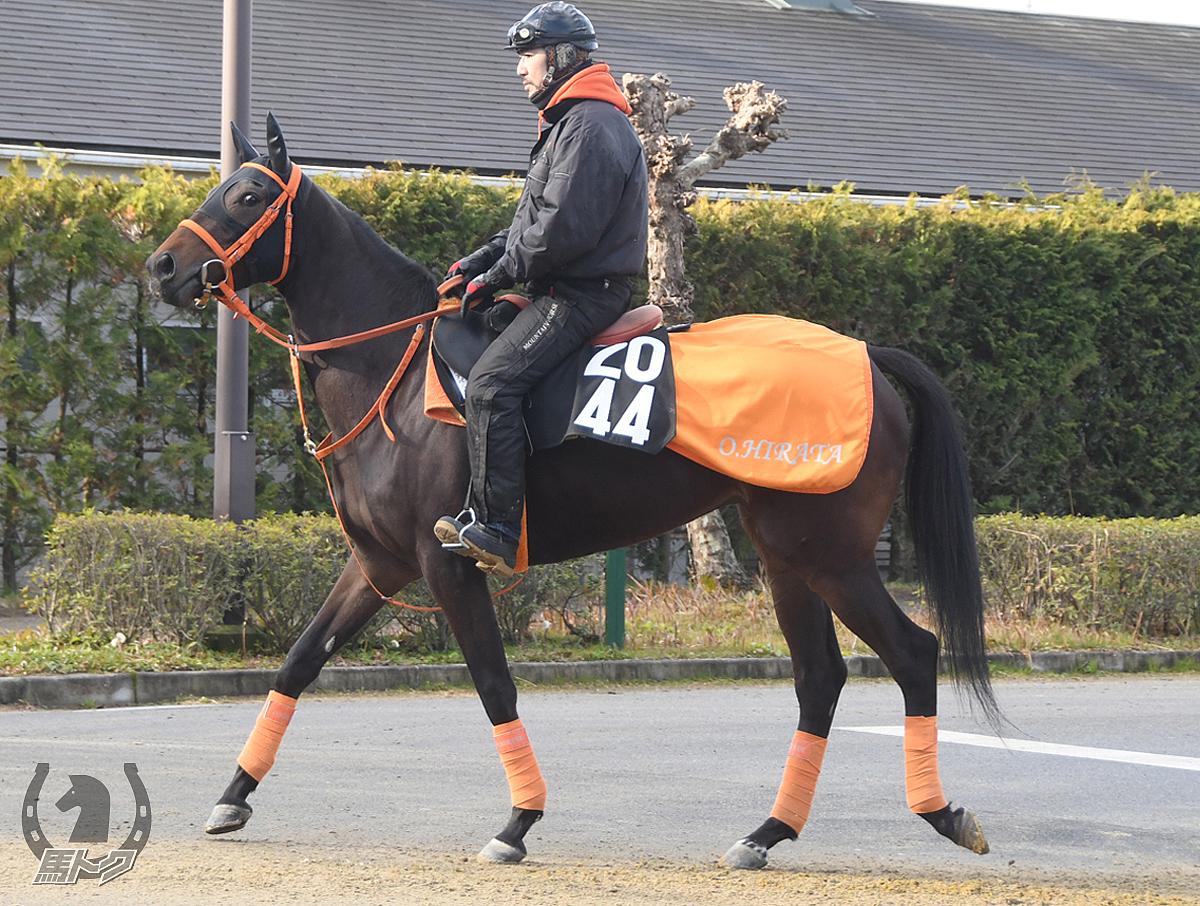アドアパルスの馬体写真