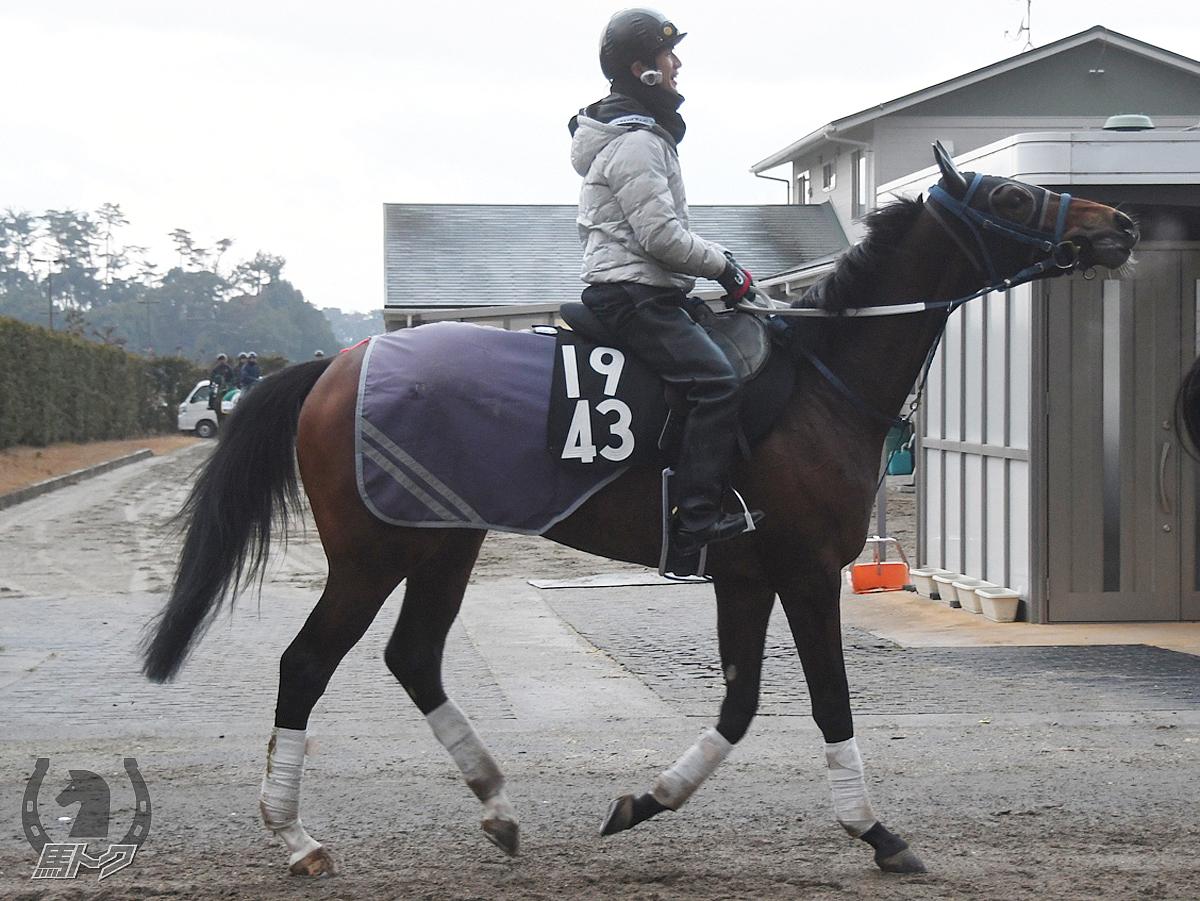 オーパスメーカーの馬体写真