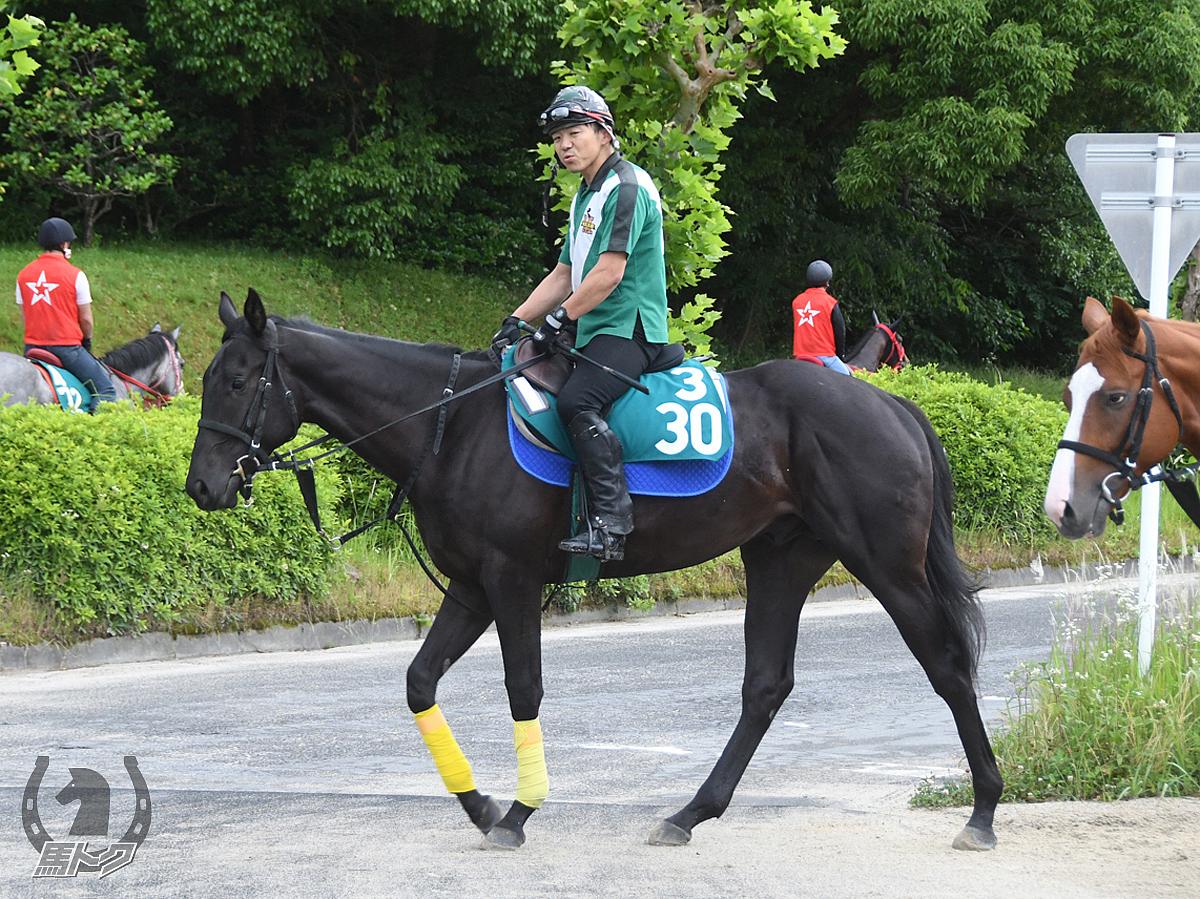 コパノケネディーの馬体写真