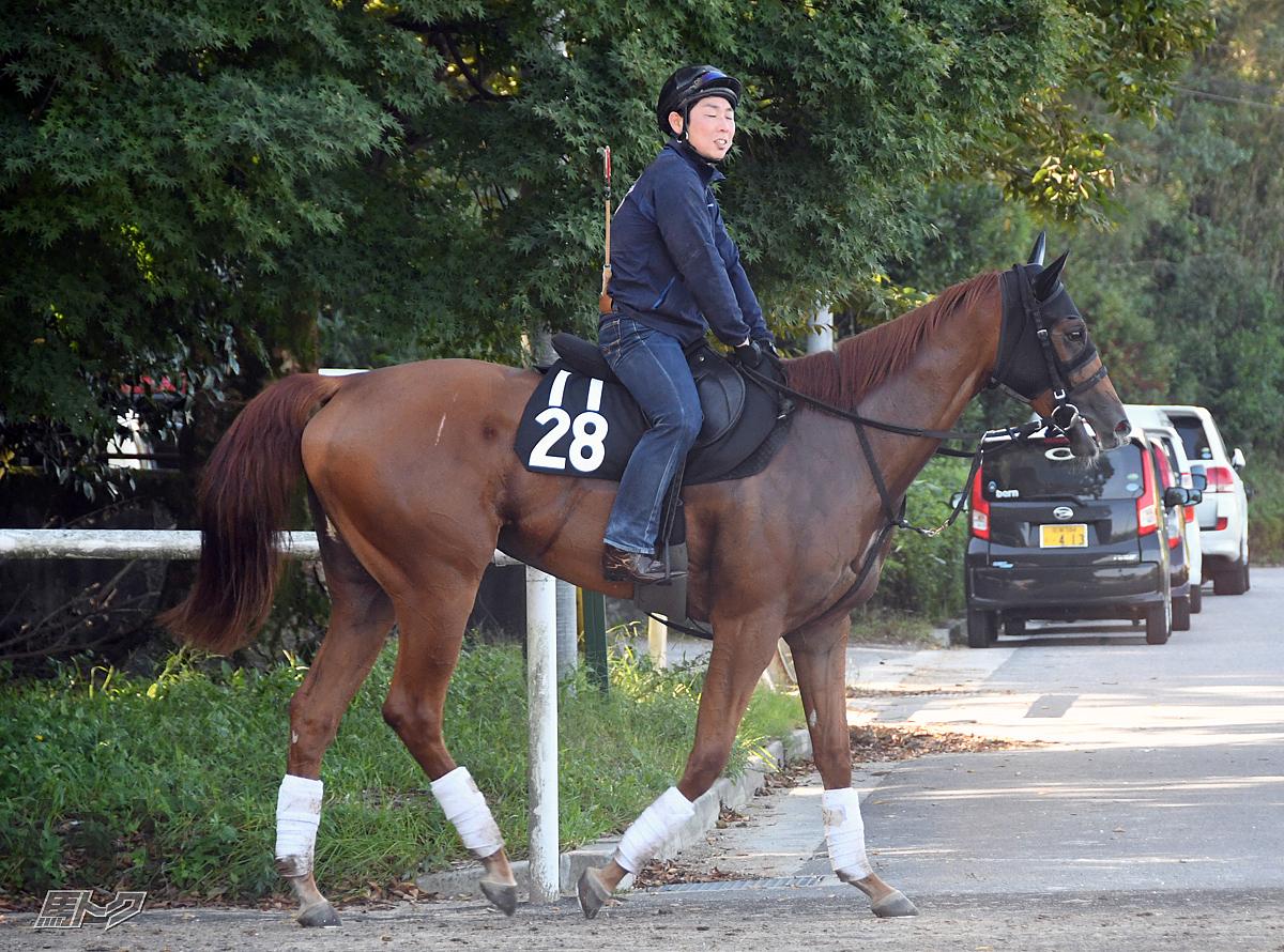 リブインスタイルの馬体写真