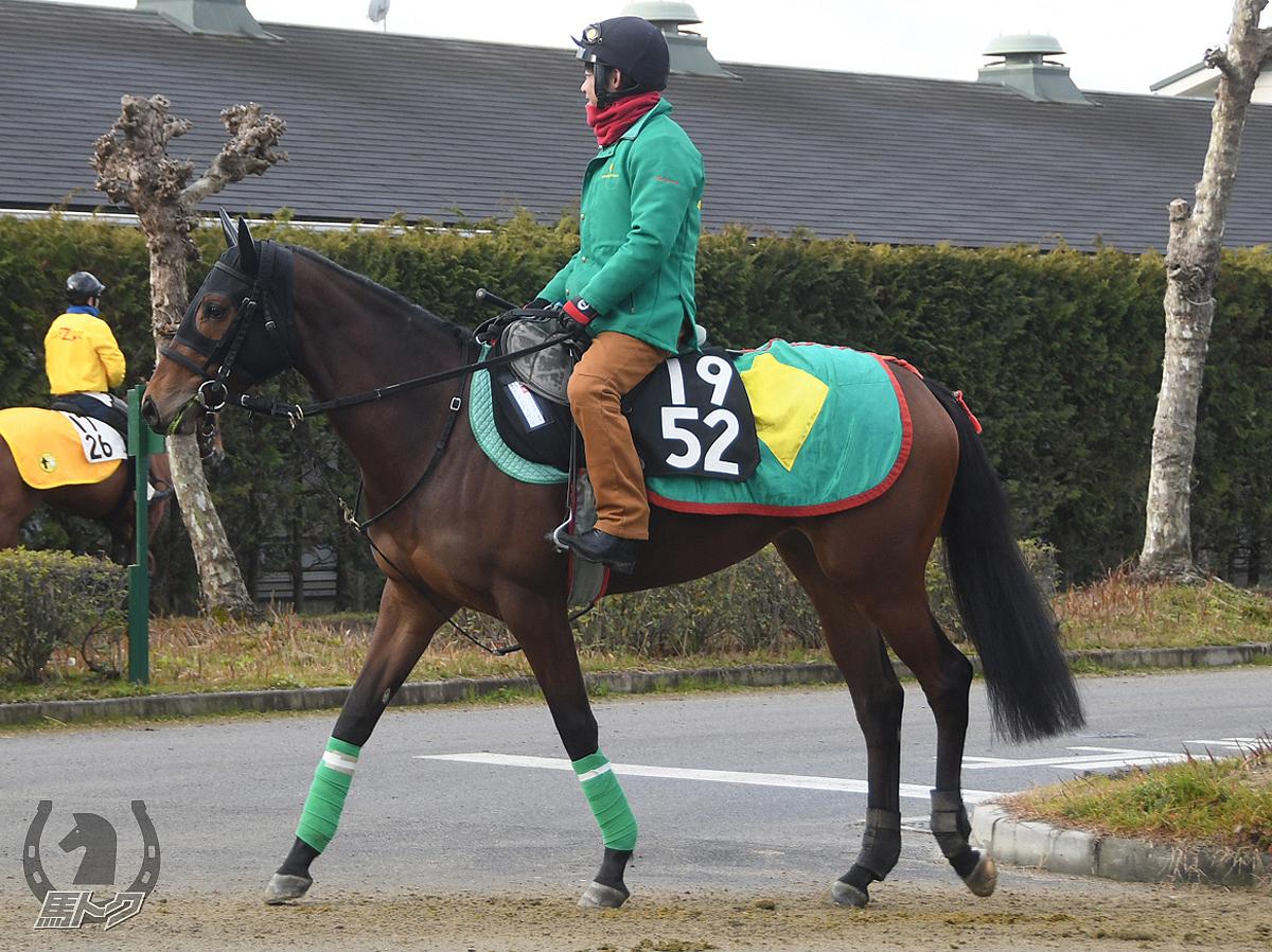 セブンティサンの馬体写真