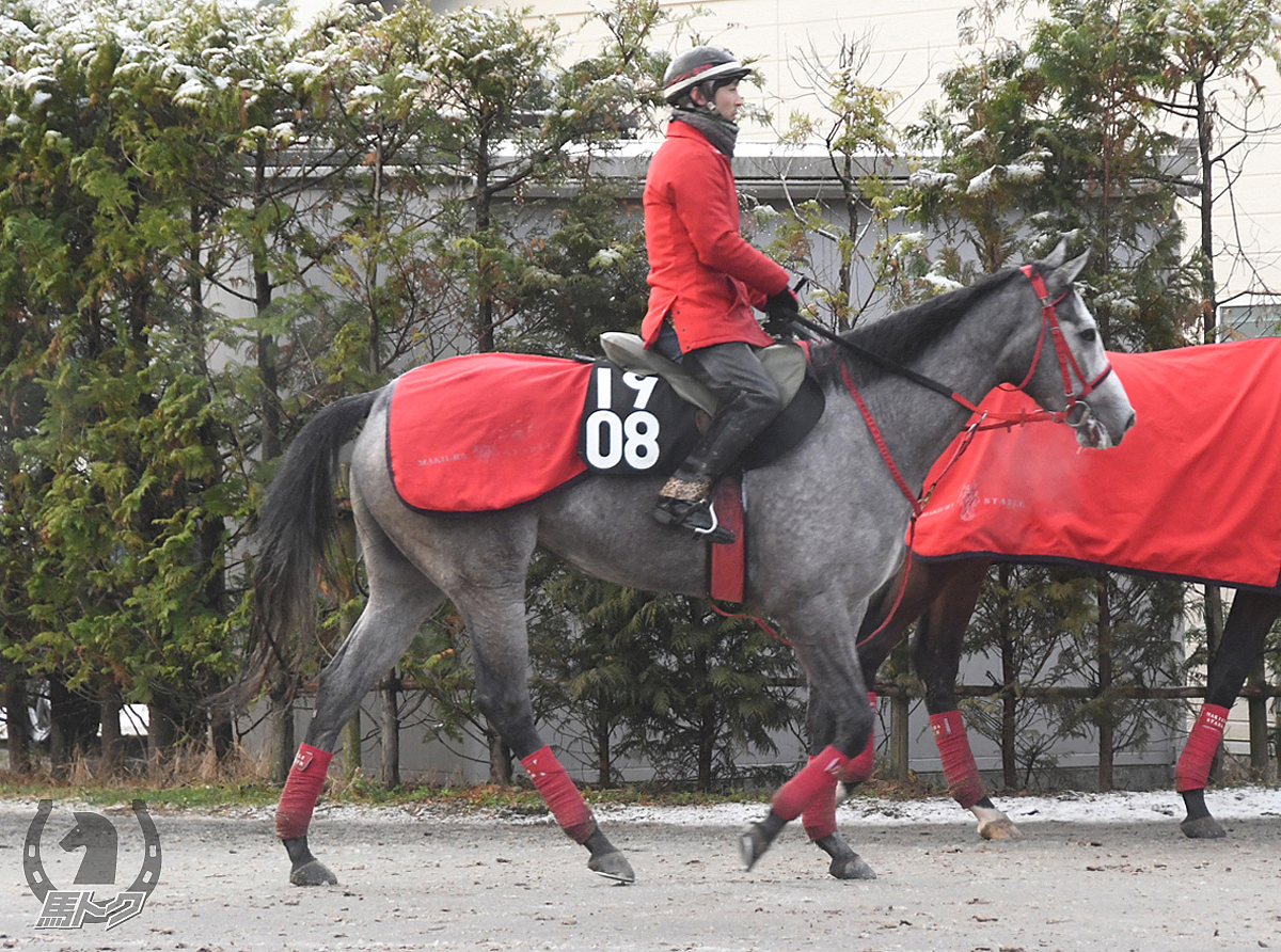 ジャングルキッドの馬体写真