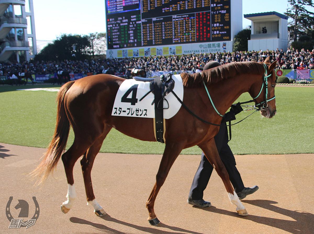スタープレゼンスの馬体写真