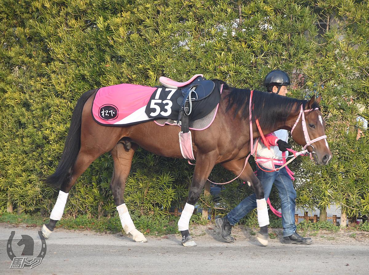 ウェイクールの馬体写真