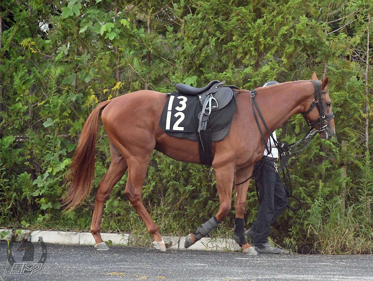 ダイメイコスモスの馬体写真