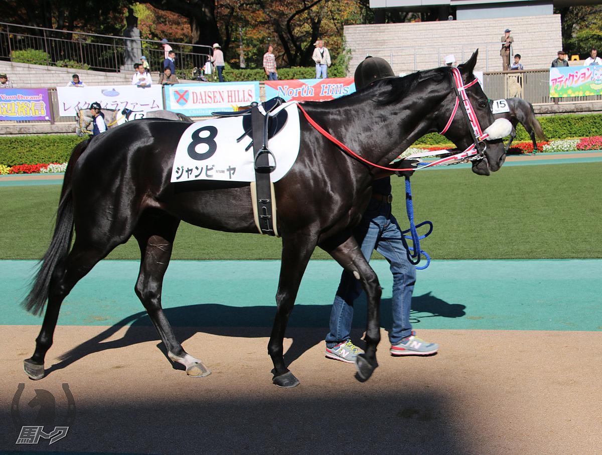 ジャンビーヤの馬体写真