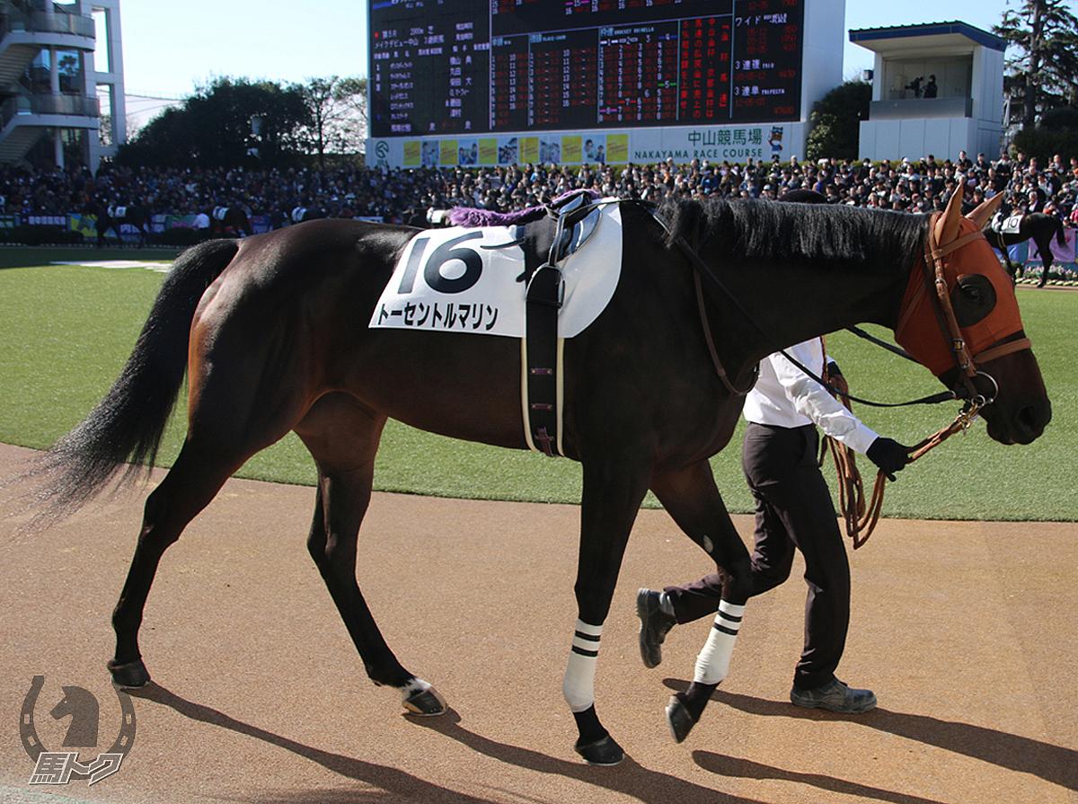 トーセントルマリンの馬体写真