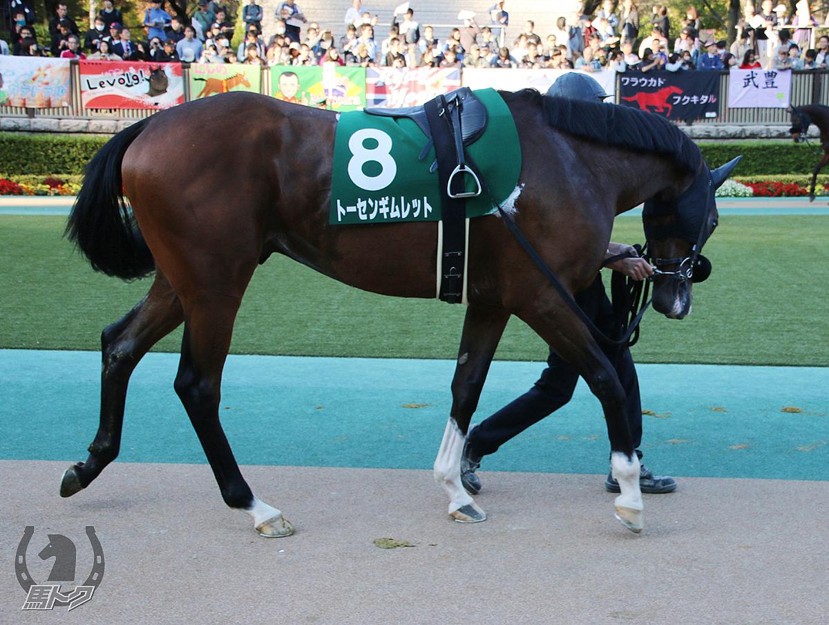トーセンギムレットの馬体写真