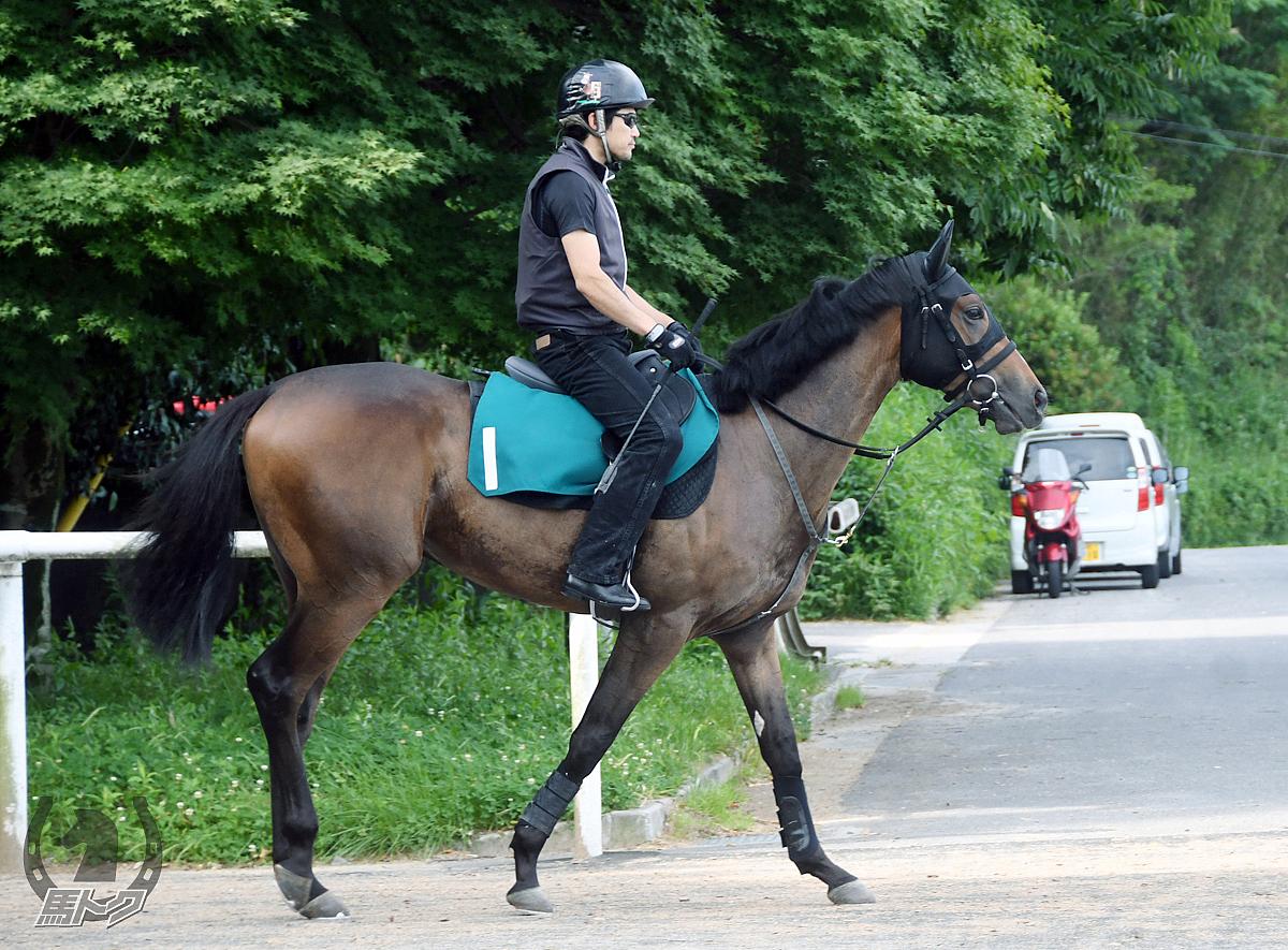 トーセントルネードの馬体写真