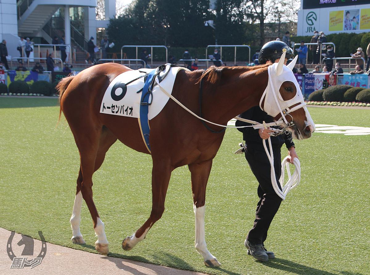 トーセンバイオの馬体写真