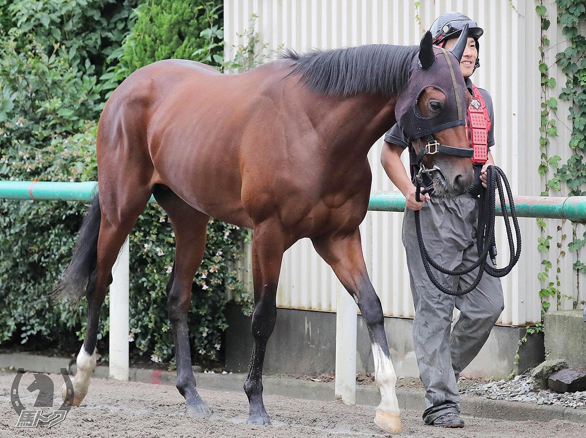 トーセングランの馬体写真