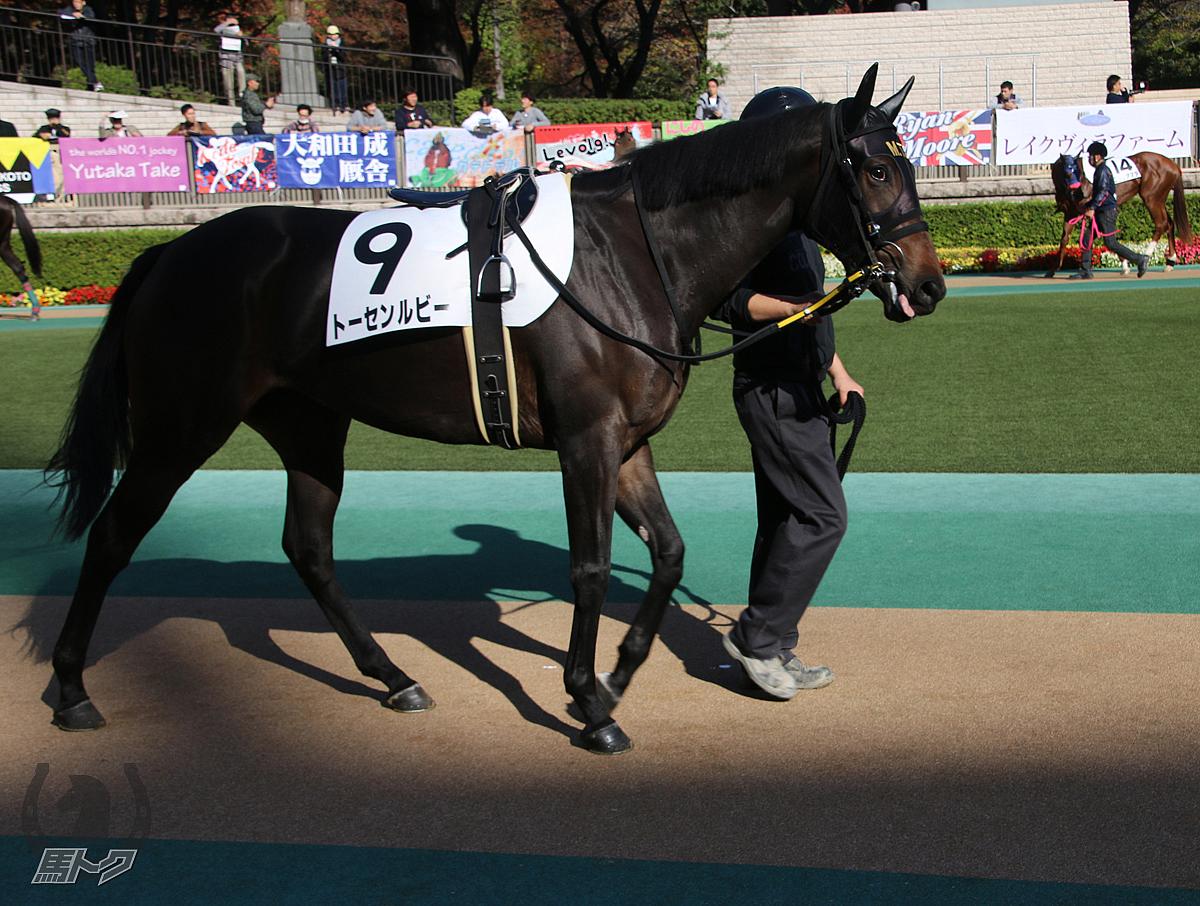 トーセンルビーの馬体写真