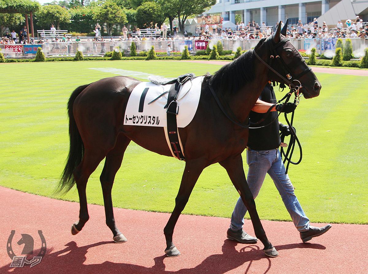 トーセンクリスタルの馬体写真