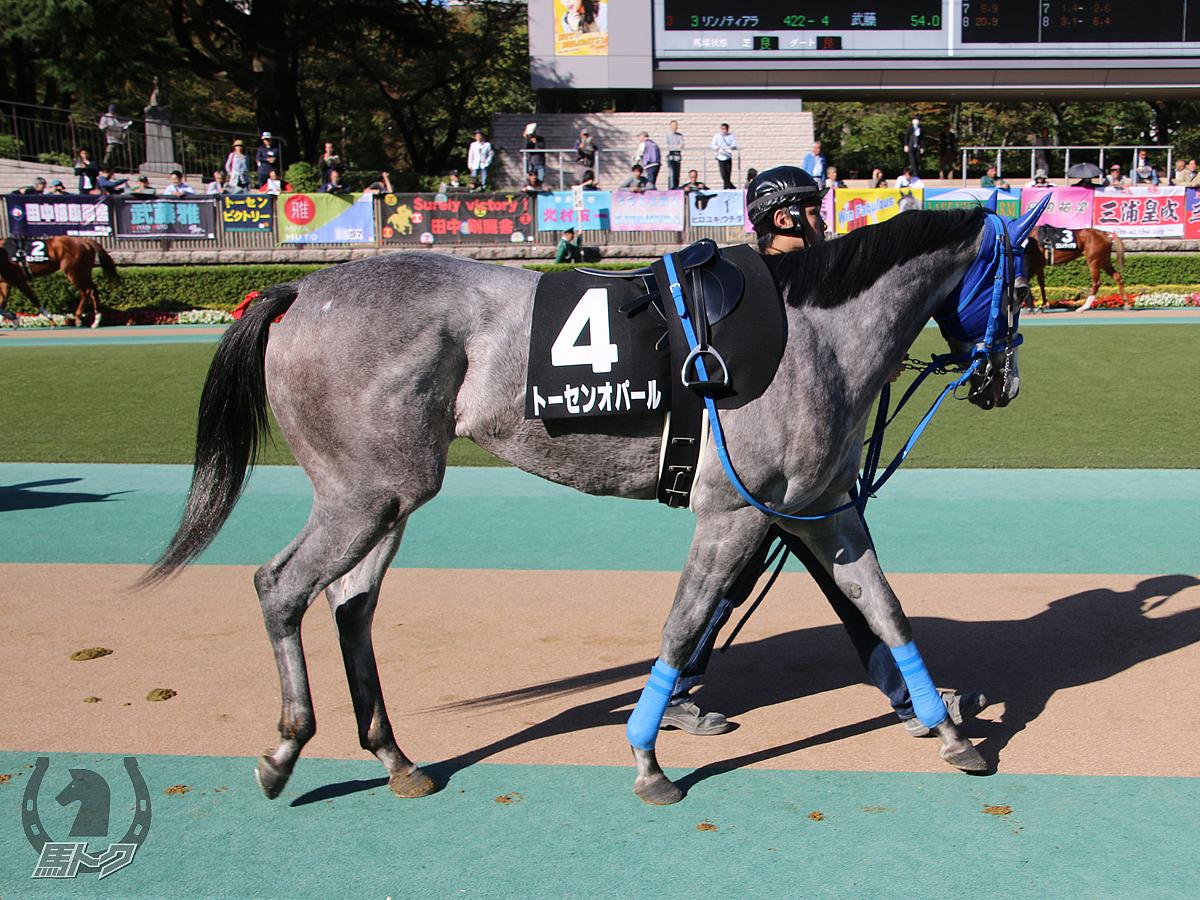 トーセンオパールの馬体写真