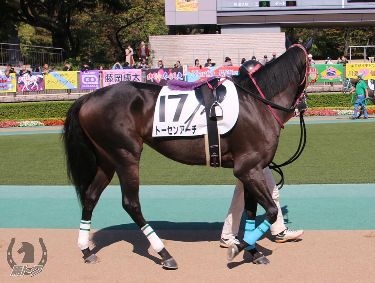 トーセンアーチの馬体写真