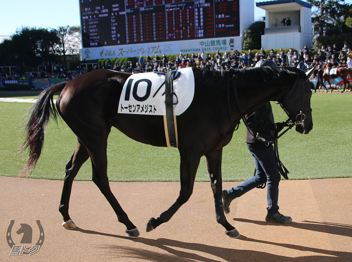 トーセンアメジストの馬体写真