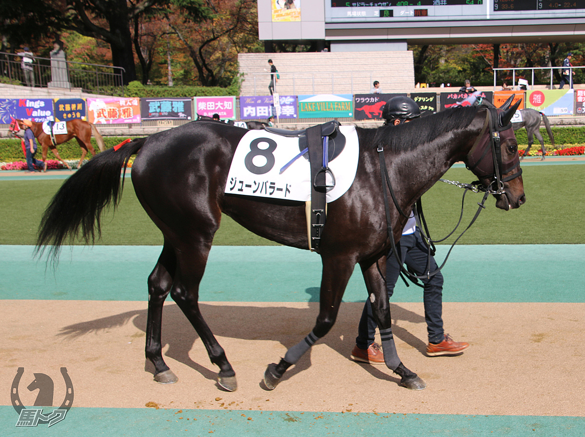 ジューンバラードの馬体写真