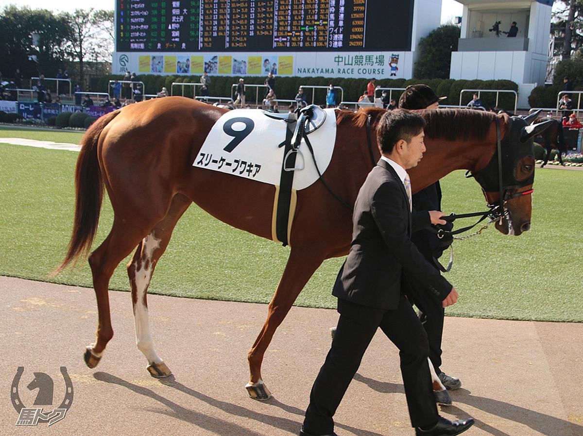 スリーケープワキアの馬体写真