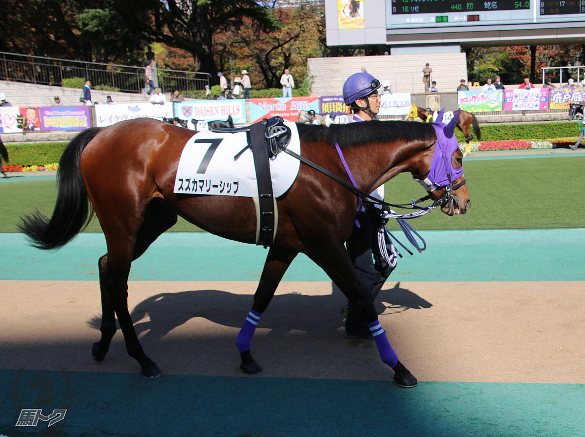 スズカマリーシップの馬体写真