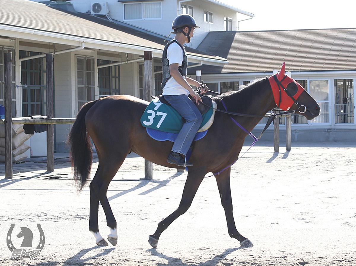 シャイニーロックの馬体写真