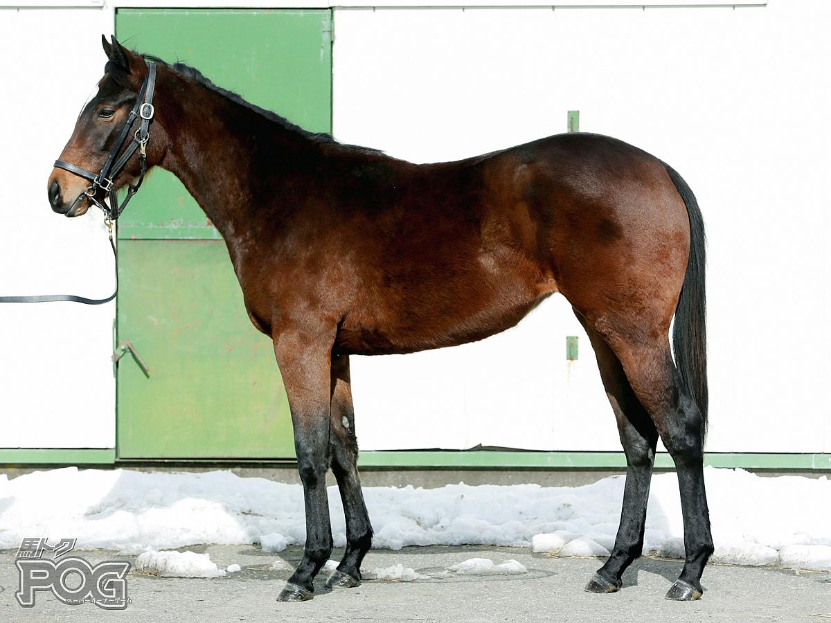 リトルキラーの馬体写真