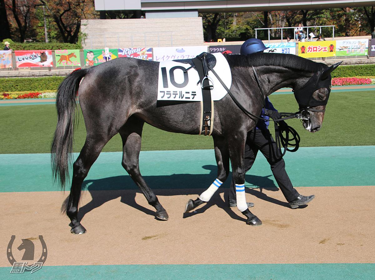 フラテルニテの馬体写真