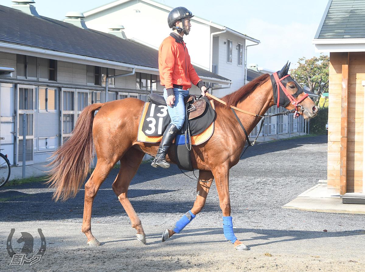 イチザベガの馬体写真