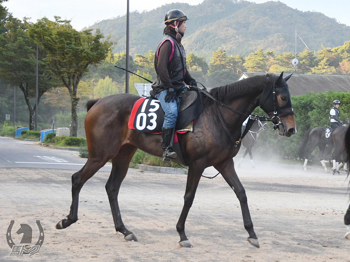 エスケーアタランタの馬体写真
