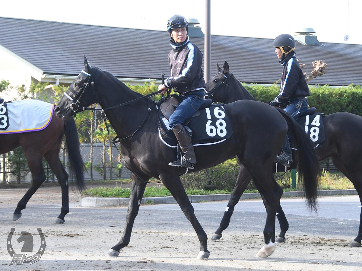 ラキエストバイオの馬体写真