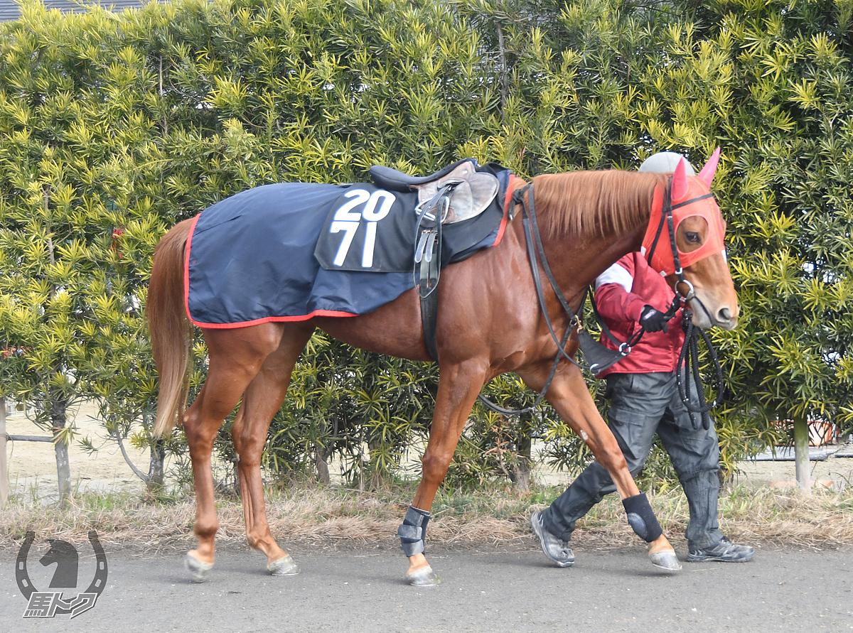 スズカミュージックの馬体写真