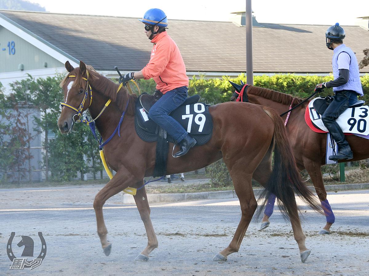 ユアハピネスの馬体写真