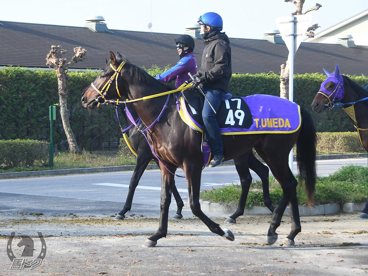 ガッドハンドの馬体写真