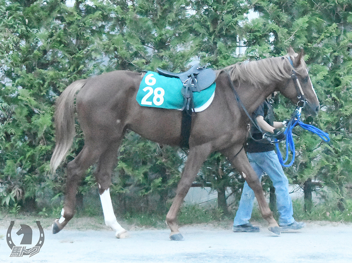 テイケイリヴェールの馬体写真