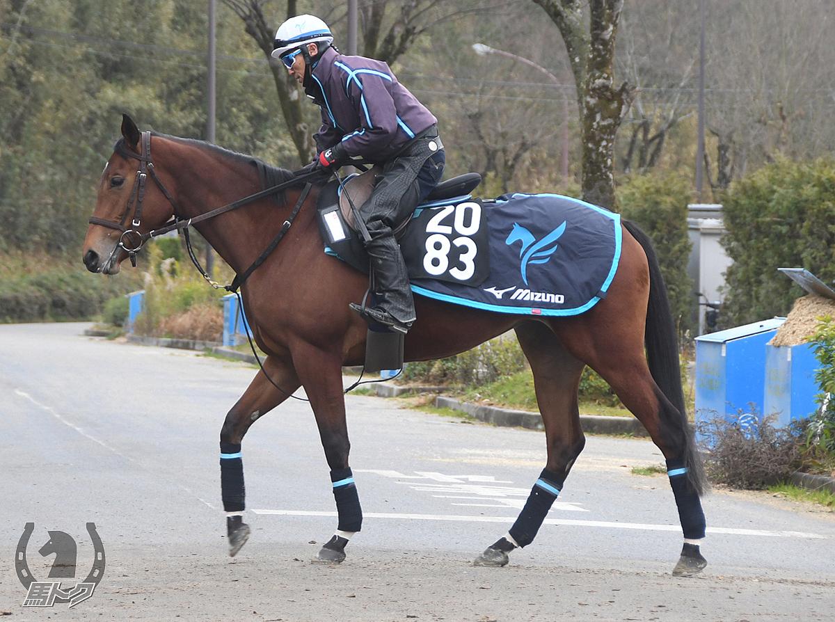タイセイカリーノの馬体写真