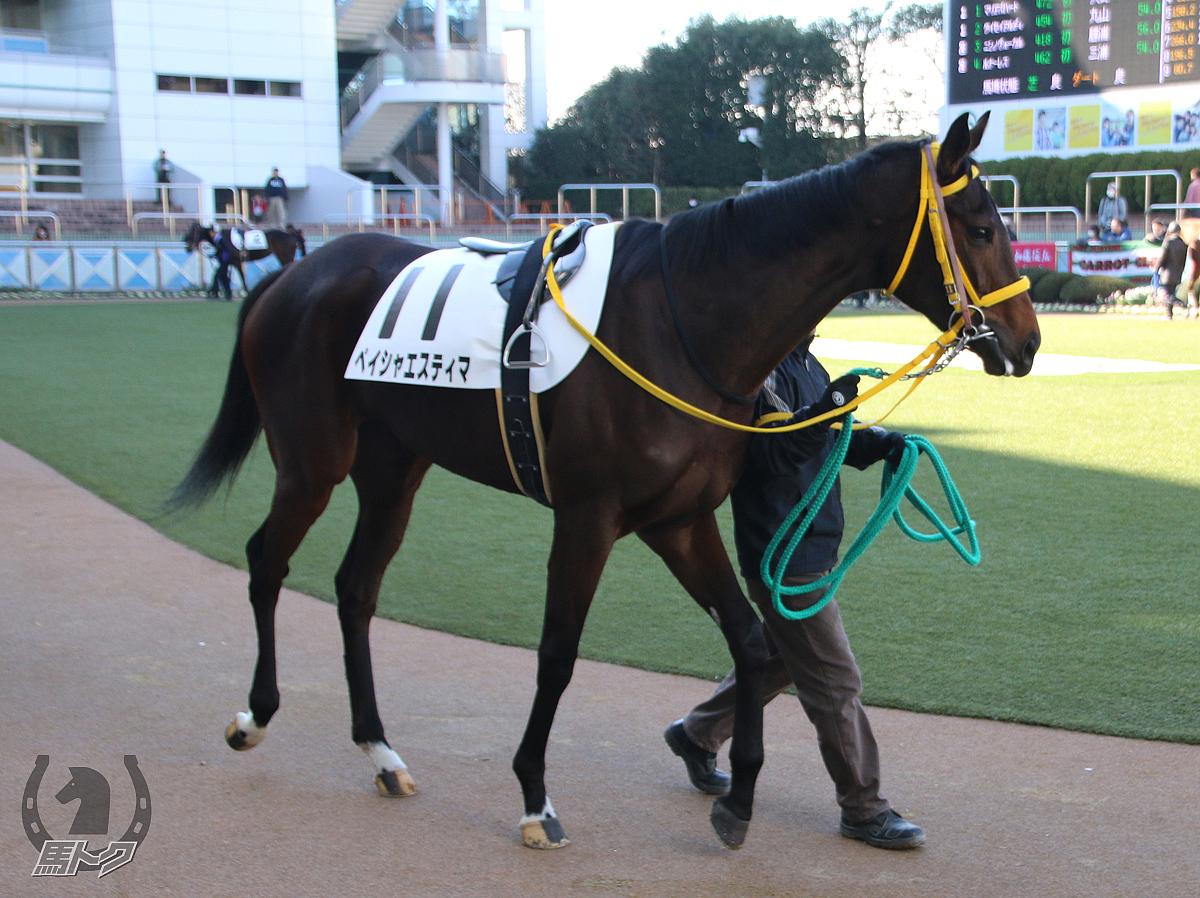ペイシャエスティマの馬体写真