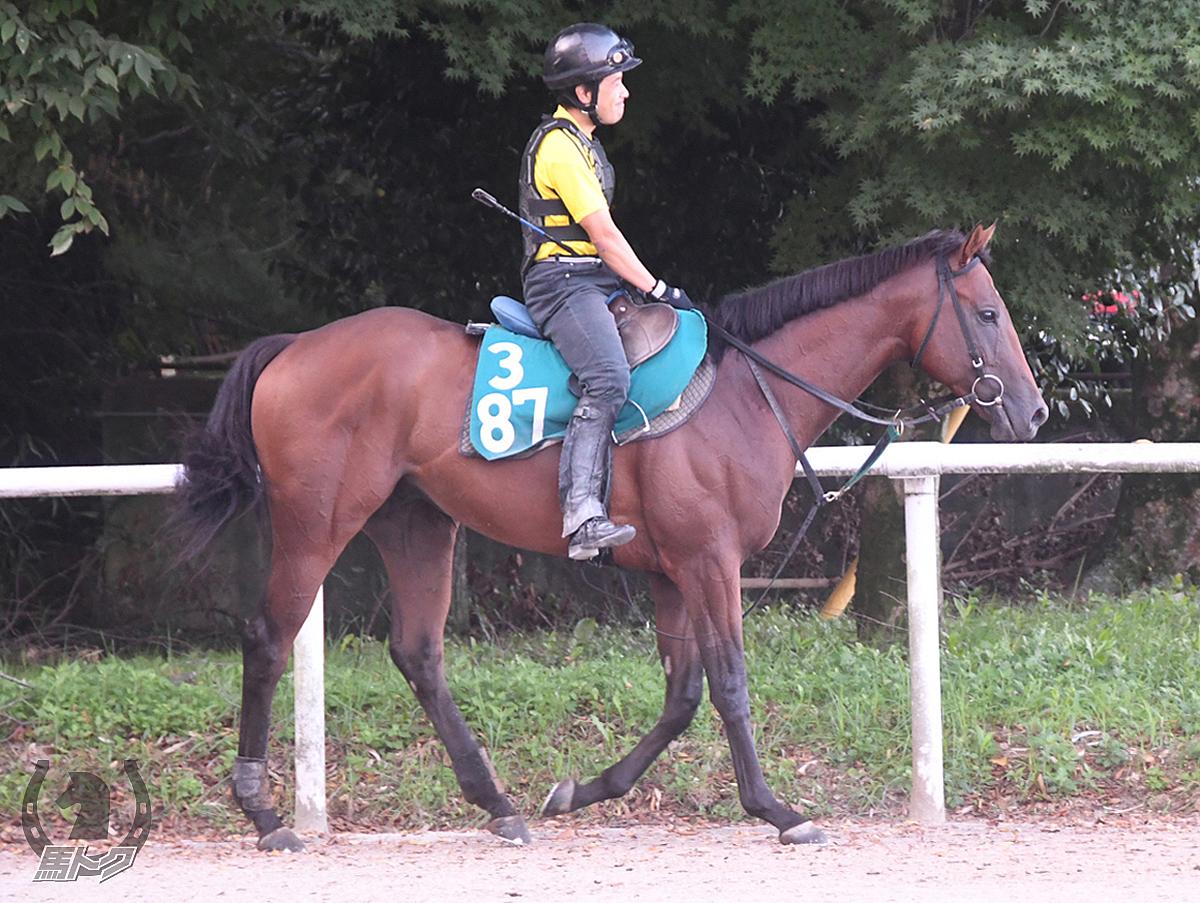 スリーカナロアーの馬体写真