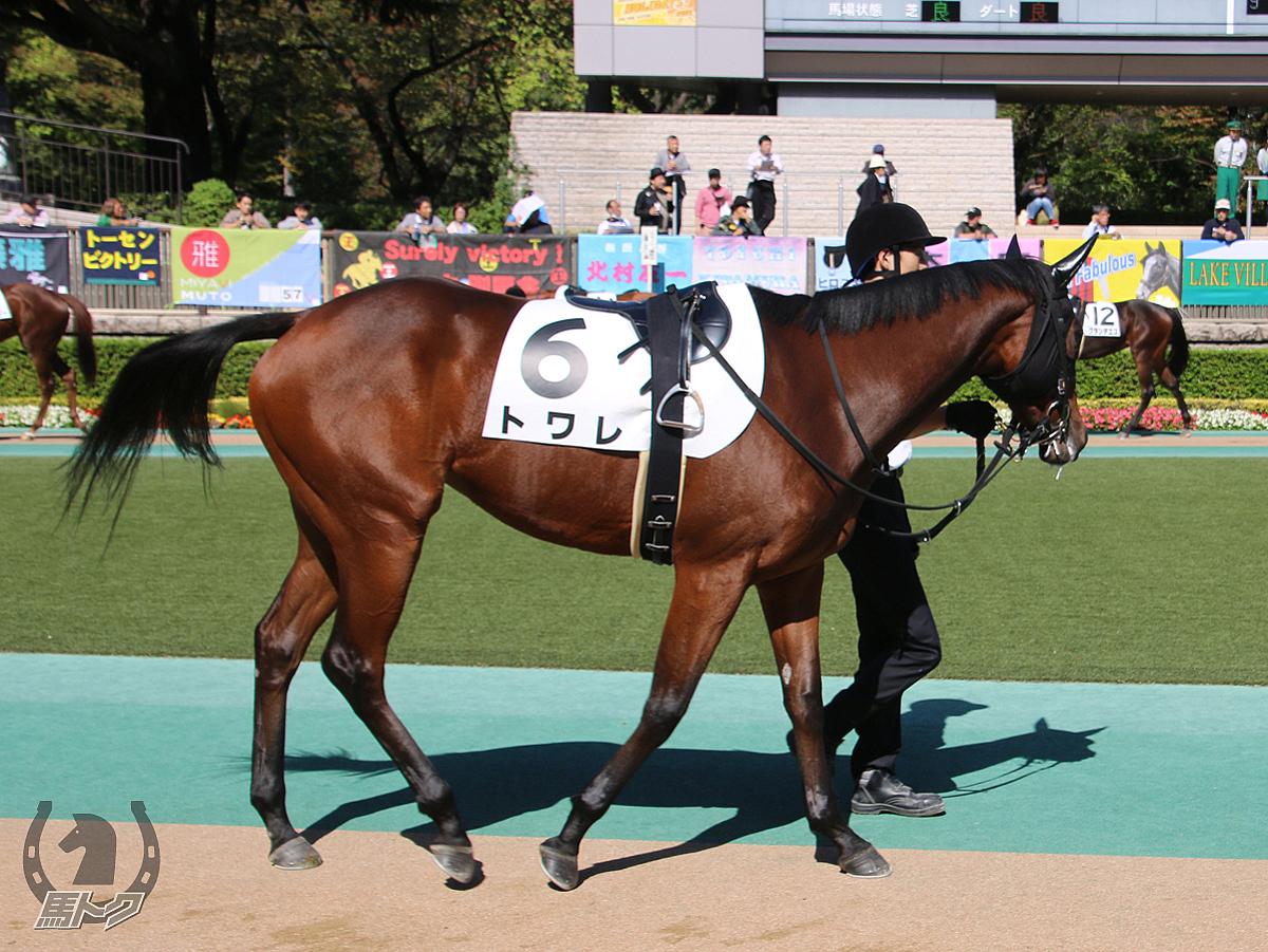 トワレの馬体写真