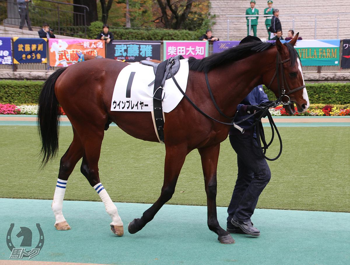 ウインプレイヤーの馬体写真