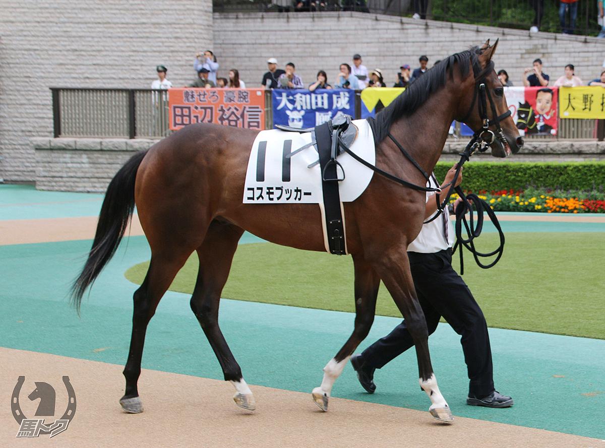 コスモブッカーの馬体写真