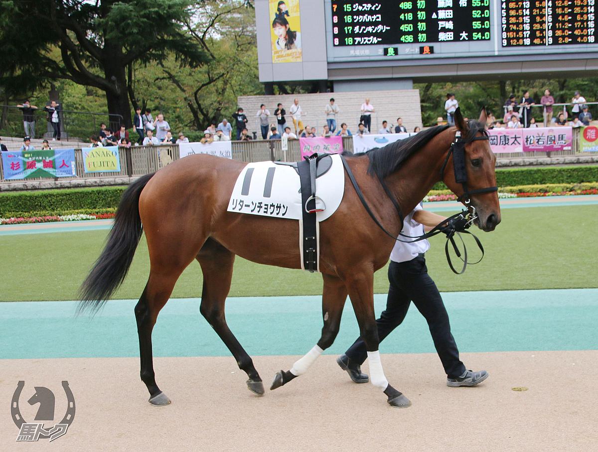 リターンチョウサンの馬体写真