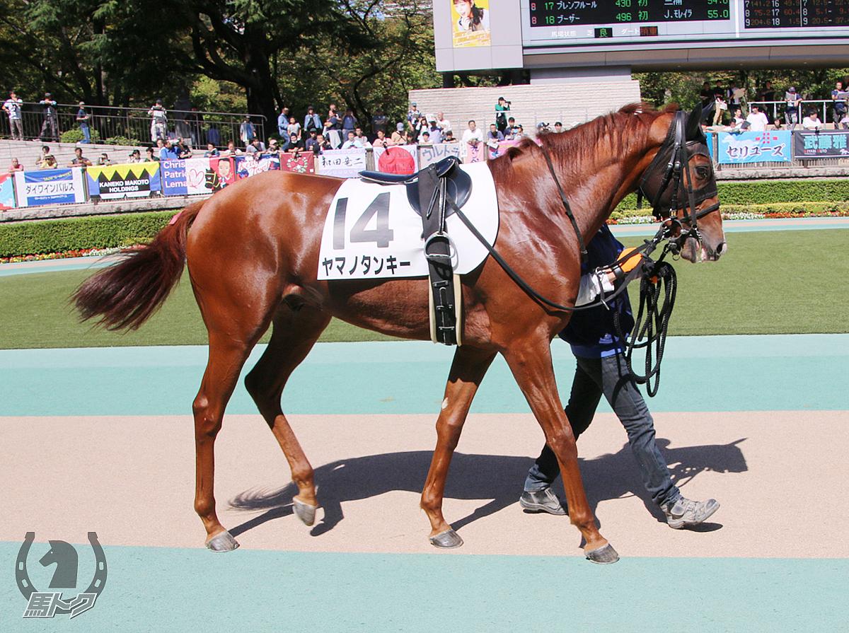 ヤマノタンキーの馬体写真